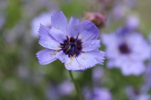 Blommor 012