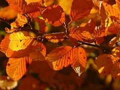 autumn-3130__180