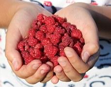 raspberry-995344__180