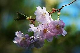 spring-flower-289844__180